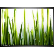 Canvas Schilderij Gras, Natuur | Groen, Geel, Wit