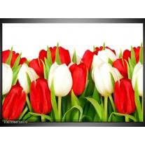Canvas Schilderij Tulpen, Bloemen | Rood, Wit, Groen