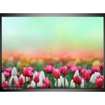 Glas Schilderij Tulpen, Bloemen | Groen, Roze, Wit