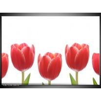 Canvas Schilderij Tulpen, Bloemen | Wit, Rood, Groen