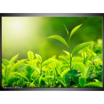 Glas Schilderij Natuur | Groen, Geel