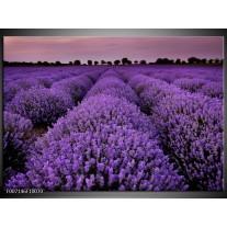 Canvas Schilderij Lavendel, Landelijk | Paars