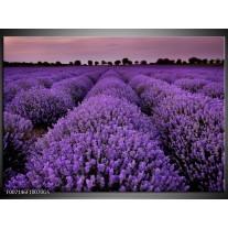 Glas Schilderij Lavendel, Landelijk | Paars