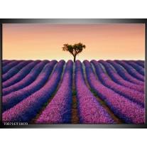 Canvas Schilderij Lavendel, Landelijk | Paars, Crème