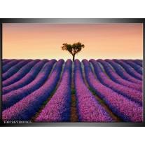 Glas Schilderij Lavendel, Landelijk | Paars, Crème