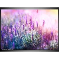 Glas Schilderij Lavendel, Landelijk | Paars, Crème, Roze