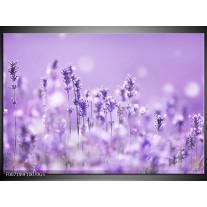 Glas Schilderij Lavendel, Landelijk | Paars, Wit