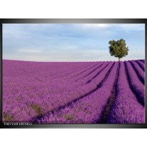 Glas Schilderij Lavendel, Landelijk | Paars, Blauw, Groen
