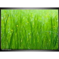 Canvas Schilderij Natuur, Gras | Zwart, Groen
