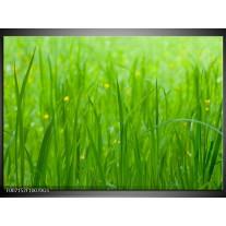 Glas Schilderij Natuur, Gras | Zwart, Groen