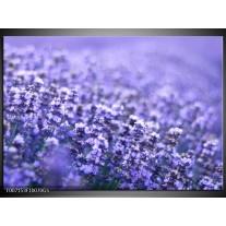 Glas Schilderij Lavendel, Landelijk | Paars, Blauw