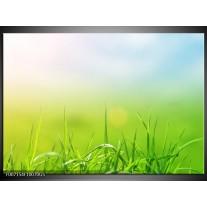 Glas Schilderij Natuur, Gras | Groen, Geel