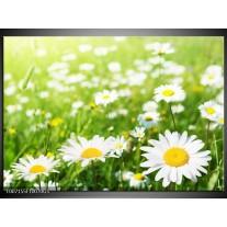 Glas Schilderij Madeliefje, Bloemen | Groen, Wit, Geel