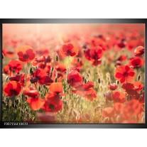 Canvas Schilderij Klaproos, Bloemen | Rood, Bruin