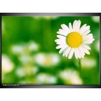 Canvas Schilderij Madeliefje, Bloemen | Groen, Wit, Geel