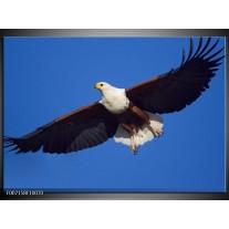 Canvas Schilderij Adelaar, Vogel | Blauw, Wit, Zwart