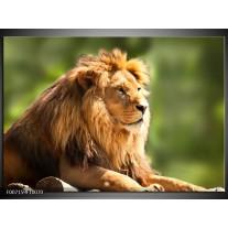 Canvas Schilderij Leeuw, Dieren | Bruin, Groen