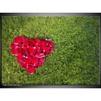 Glas Schilderij Bloem, Gras | Rood, Groen, Roze