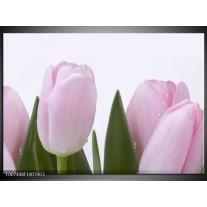 Glas Schilderij Tulpen, Bloemen | Roze, Wit