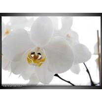 Glas Schilderij Orchidee, Bloemen | Wit, Geel