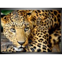 Canvas Schilderij Wilde Dieren | Zwart, Bruin, Geel