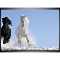 Canvas Schilderij Paard, Dieren | Blauw, Zwart, Wit