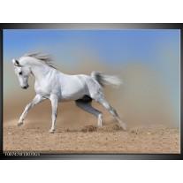 Glas Schilderij Paard, Dieren | Crème , Blauw, Wit
