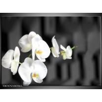 Glas Schilderij Orchidee, Bloemen | Zwart, Wit