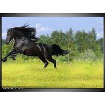 Glas Schilderij Paard, Dieren | Zwart, Groen