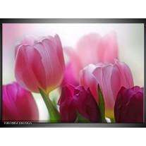Glas Schilderij Tulpen, Bloemen | Roze, Paars