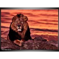 Canvas Schilderij Wilde Dieren | Oranje, Bruin