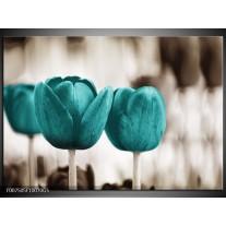 Glas Schilderij Tulpen, Bloemen   Turquoise, Sepia