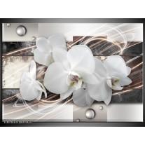 Glas Schilderij Orchidee, Bloemen | Grijs, Wit