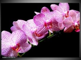 Foto canvas schilderij Orchidee | Paars, Wit, Zwart