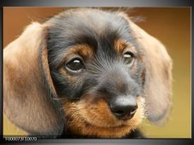 Glas schilderij Hond   Grijs, Zwart, Bruin