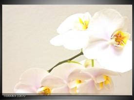 Glas schilderij Orchidee | Crème , Wit, Geel