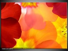 Glas schilderij Blaadjes   Rood, Geel, Oranje