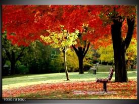 Glas schilderij Park | Rood, Geel, Groen