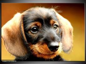 Glas schilderij Hond   Bruin, Geel, Zwart