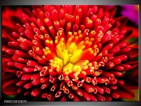 Glas schilderij Natuur | Rood, Geel