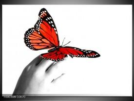 Glas schilderij Vlinder | Rood, Wit, Zwart
