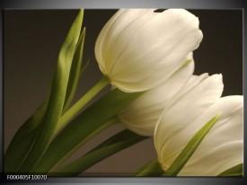 Foto canvas schilderij Tulpen | Groen, Wit, Grijs