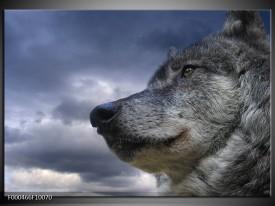 Glas schilderij Wolf | Grijs, Blauw, Wit