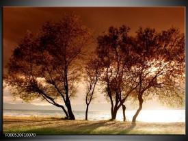 Glas schilderij Bomen | Bruin, Wit, Zwart
