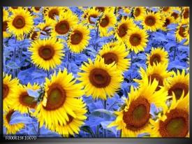 Glas schilderij Zonnebloem | Geel, Blauw, Bruin