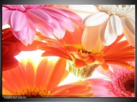 Foto canvas schilderij Bloem | Oranje, Wit, Geel