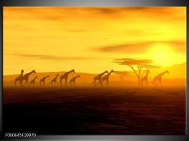 Glas schilderij Afrika | Geel, Bruin, Zwart