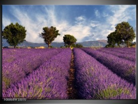Foto canvas schilderij Lavendel | Paars, Blauw, Wit