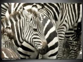 Glas schilderij Zebra   Zwart, Wit, Grijs
