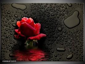 Foto canvas schilderij Roos | Rood, Zwart, Wit